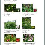 2017/07/29 Head Gardener's Report