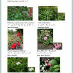 2017/07/30 Head Gardener's Report