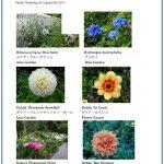 2017/08/05 Head Gardener's Report