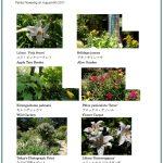 2017/08/06 Head Gardener's Report