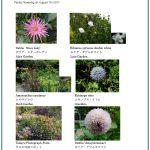 2017/08/07 Head Gardener's Report