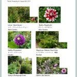 2017/08/08 Head Gardener's Report