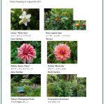 2017/08/09 Head Gardener's Report
