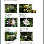 2017/08/11 Head Gardener's Report