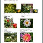2017/08/13 Head Gardener's Report