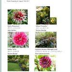 2017/08/14 Head Gardener's Report