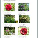 2017/08/18 Head Gardener's Report