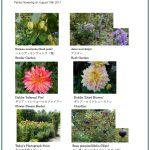 2017/08/19 Head Gardener's Report
