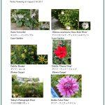 2017/08/21 Head Gardener's Report