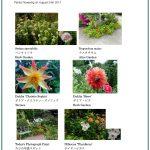 2017/08/24 Head Gardener's Report