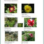 2017/08/25 Head Gardener's Report