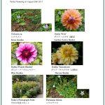 2017/08/26 Head Gardener's Report