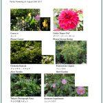 2017/08/28 Head Gardener's Report