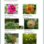 2017/08/29 Head Gardener's Report