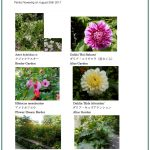 2017/08/30 Head Gardener's Report