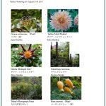 2017/08/31 Head Gardener's Report
