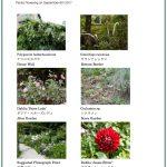 2017/09/08 Head Gardener's Report