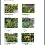 2017/09/22 Head Gardener's Report