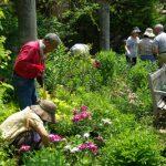 毎週水曜日 ガーデンボランティア募集中です『バラクラ・ガーデニングクラブ』