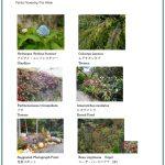 2017/10/06 Head Gardener's Report