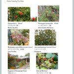 2017/10/20 Head Gardener's Report
