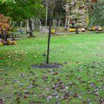 紅葉で美しい蓼科バラクラ へ 首都圏からは「レールでバラクラ」JRプランがお得です