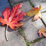 バラクラ紅葉まつり 落葉ハントが好評です。