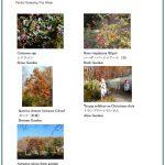 2017/11/11 Head Gardener's Report