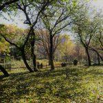 紅葉の美しさ から 落葉の美しさ そして 冬の樹形の美しさ へ 11月5日ガーデンの様子