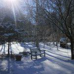 冬の英国庭園、入園無料です! 2018年3月15日まで
