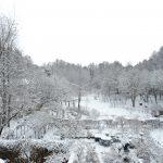 1月23日(火) 雪のガーデンの様子