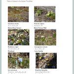 2018/03/15 Head Gardener's Report