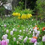 球根花で春爛漫 5月3日(木)のガーデンの様子
