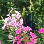 涼しい庭散策のススメ