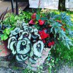 夏のガーデンセンター  植物入荷情報(8月4日)