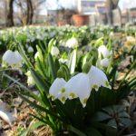 うららかな春の光景 長野県民入園無料デー 4月12日(金)~4月15日(月)