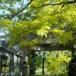 蓼科バラクラ人気のサマーコンサート 緑陰のガーデンで