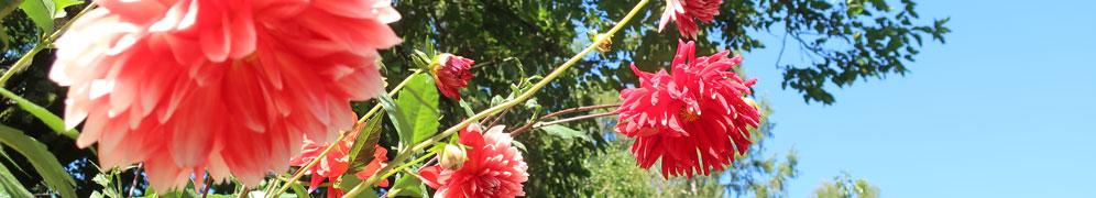 協賛 トップ 赤 花