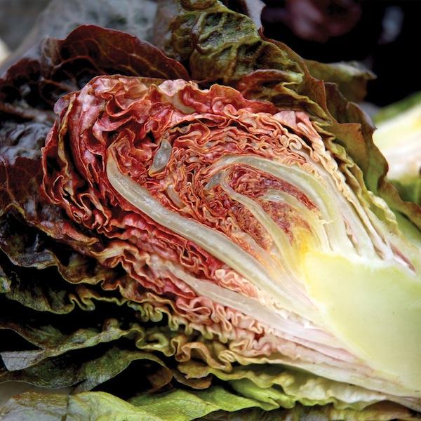 Lettuce 'Intred' .jpg