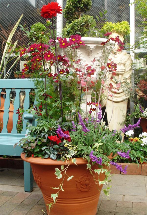 dahlia container garden.jpg