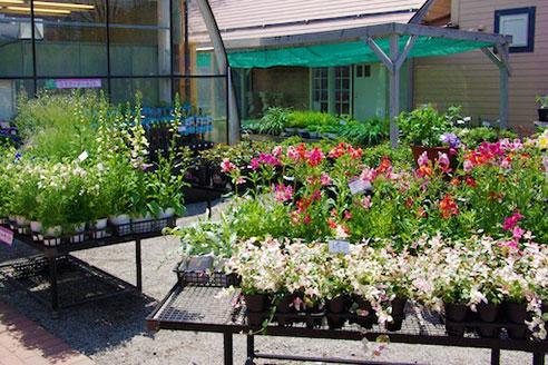 Plants Centre