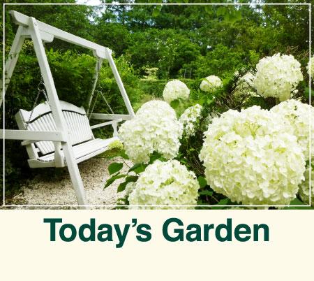 ガーデンの様子